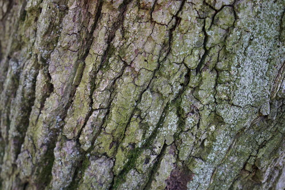 Lincolnshire Advanced Tree Care Types