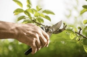 Tree Pruning Improves Curb Appeal