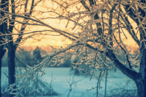 Winter-Tree-Care Checklist