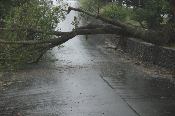 Storm season tree safety tips
