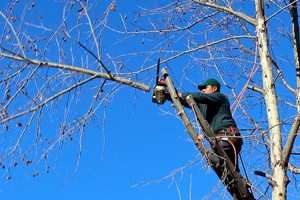 tree-cutting-service