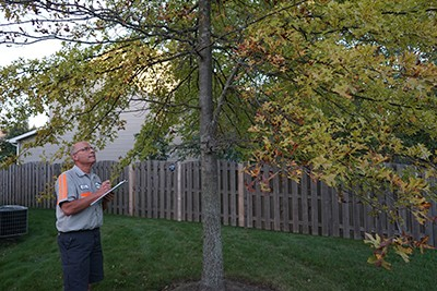 Tree Removal Service NW Suburbs Chicago