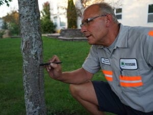 preventive tree maintenance