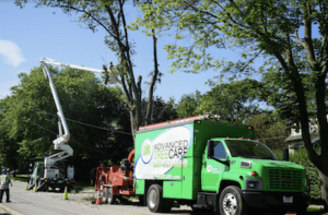 Advanced-Tree-Care-Certified-Arborists