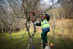 Caring for Your Trees Over the Winter