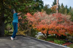 The Fastest-Growing Trees for Privacy and Curb Appeal