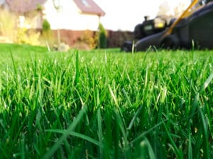Simple Lawn Care Tips for Spring