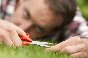 Five Simple Steps to Help You Love Your Lawn