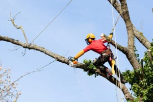 Why Should You Use an Arborist?