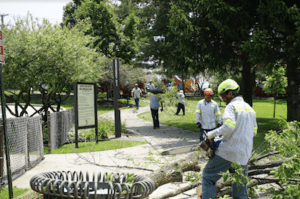Branch management tree services