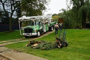 Common Signs You Might Need Tree Removal